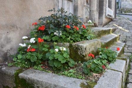 A la terrade les plants sont à l'ombre